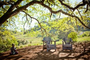 chairs under a majestic oak tree at Bell Valley Retreat in Boonville, Anderson Valley, California