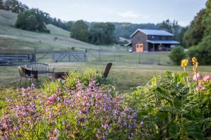 an expansive meadow with wildflowers and a charming barn in the distance at Bell Valley Retreat in Boonville, Anderson Valley, California