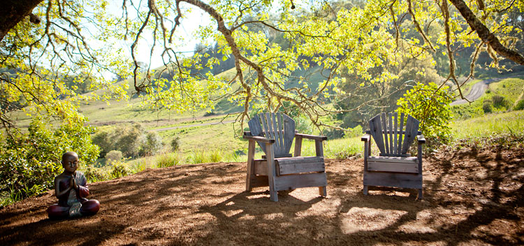 chairs in the dappled shade under an oak tree at The Toll House at Bell Valley Retreat in Anderson Valley, Mendocino County, California